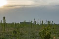 10 - Plantaciones