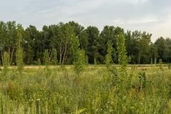 11 - Plantaciones