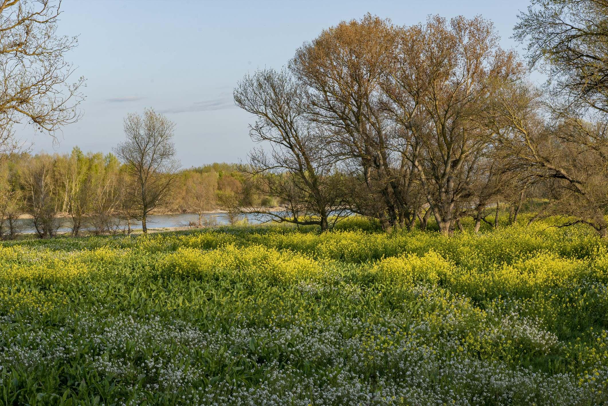 La restauración del Ebro en Alfaro muestra sus primeros beneficios al ecosistema